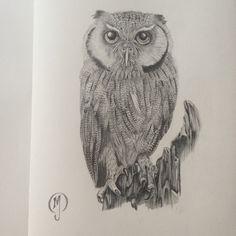 Scop owl pencil on paper