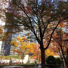 今年は街路樹のケヤキが様々な色になり少しだけ楽しませてもらっている#keyaki #color #shinjuku #tokyo