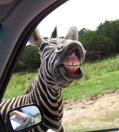 20 animales que simplemente están muy locos.