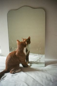 """""""mirror mirror on the wall, who is the cutest cat of them all?"""" #funnycats #cute"""