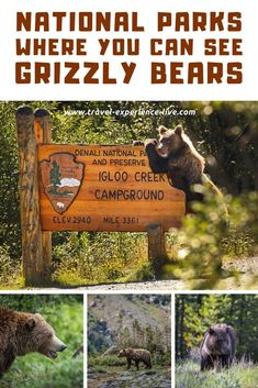 These are the best U.S national parks to see grizzly bears in the wild!