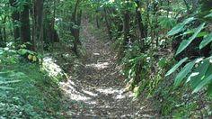 Chemin dans les sous bois/ trail in the woods