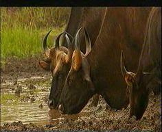 Wilde Tiere im Nationalpark - #AsiaticaReisen