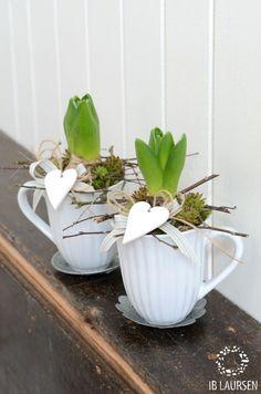 Der Frühling in der Tasse. Darin befindet sich eine Hyazinthe, Sukkulenten und ein Herz rundet das Ganze ab.