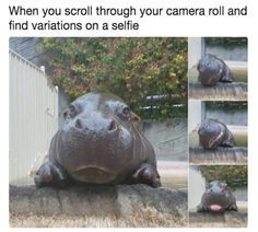 Funny Fresh and Fantastic Animal Memes to Get You Going - 12