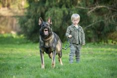 This is a direct con Dogs And Kids, All Dogs, Dog Owners, Dog Love, Your Dog, German Shepherds, Canning, Children, Cute