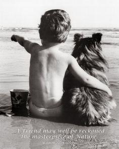 Best Friends Taidevedos