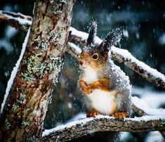 Winter time by Bjørn Leirvik, via 500px
