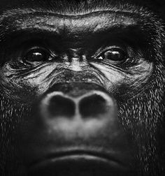 Top 15 of the most beautiful photos of African animals by Lauren . - Top 50 of the most beautiful photos of African animals by Laurent Baheux, a stay in the land of lions Wild Animals In Africa, African Animals, Amazing Animals, Animals Beautiful, Wildlife Photography, Animal Photography, Regard Animal, Animals And Pets, Cute Animals