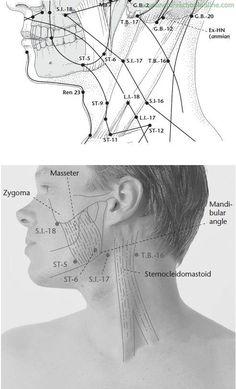 SI-17 Aspecto Celestial Tianrong - Puntos de acupuntura -2