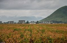The fields looked ready for harvest as the photographer visited. 'Why would anyone mock up...