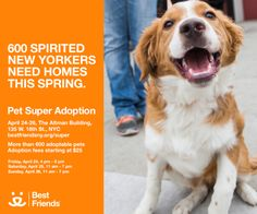 Adoption fees waived for the first 50 pet adopters who say #SaveThemAll at @bestfriends #NYCSuperAdoption, on Sunday. bestfriendssuperadoption