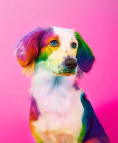 New York Artist Covers Pictures In Rainbows Because Everything Is Better With Lots Of Color Der New Yorker Künstler deckt alles in Regenbogenfarben ab und [. Baby Animals Pictures, Cute Animal Photos, Funny Animal Pictures, Dog Pictures, Animals And Pets, Cute Little Animals, Cute Funny Animals, Rainbow Dog, Colorful Animals