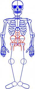 how to draw a skeleton lesson. week 2 mirror images? science grammar that week is axial skeleton :)