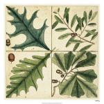 Catesby Leaf Quadrant III
