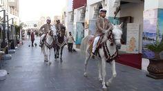 Arabic horses in Doha - Qatar #horses #paardrijden #paarden