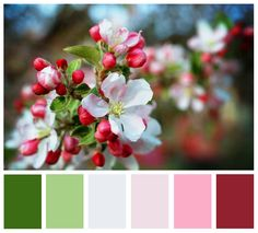 apple blossom palette