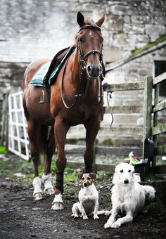 Horse and his dog friends, Fruity and Belle : Photo