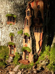 Tiny house in the base of a tree where the wee folk live by sparkle62