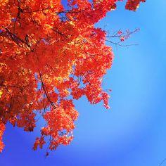 Fall Colors :)