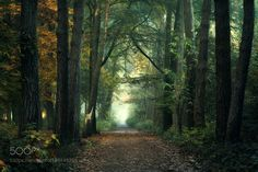 http://ift.tt/2jr6Zkd #Nature_breathtaking #Photos Welcome to the Jungle. by IngeBovens