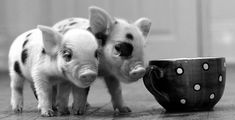 "18. ""If I could rearrange the alphabet, I would put U and I together."" 