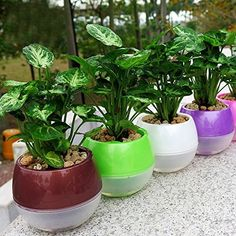 Mkono 5 Pack Self Watering Planter Plastic Flower Pot Inch (Mixed Colors) -- Check this awesome image : Planters Pots containers Homemade Greenhouse, Plastic Flower Pots, Self Watering Planter, Succulents Diy, Gardening For Beginners, Gardening Tips, Water Plants, Garden Supplies, Plant Care