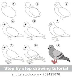 Kid game to develop drawing skill with easy gaming level for preschool kids, drawing educational tutorial for Grey Dove Bird portfolio Stock Photo and Image Portfolio by Kid_Games_Catalog Art Drawings For Kids, Pencil Art Drawings, Bird Drawings, Drawing For Kids, Cartoon Drawings, Animal Drawings, Easy Drawings, Drawing Sketches, Art For Kids