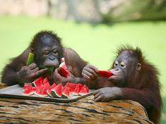 Lustige Tiere - 19 stimmungsvolle Fotos für echte Tierliebhaber - #Haustiere