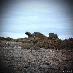 Tortue en pierre - Bretagne