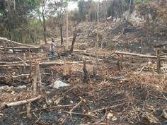 Apresan a siete hombres quemando tareas de tierra en Barahona