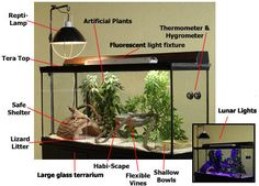 Habitat Checklist: Bearded Dragon Housing - without the lunar lights and reptile sand.