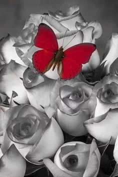 [Visit to Buy] Diy Diamond Painting Black & White Rose Red Butterfly Square Full Gear Diamond Crystal Embroidery Handmade Room Decorative Black Painted Walls, Black And White Roses, Red Black, Mosaic Kits, Crystal Embroidery, Red Images, Some Beautiful Pictures, Diamond Paint, Red Butterfly
