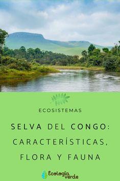 84 Ideas De Ecosistemas En 2021 Tipos De Ecosistemas Ecosistemas Ecología