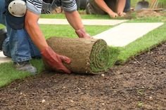 Tips for Soil Preparation Before Laying Sod Residential Landscaping, Landscaping Software, Landscaping Company, Backyard Landscaping, Landscaping Design, Luxury Landscaping, Pergola Designs, Lawn Care Business Cards, Lawn Care Companies