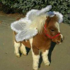 Horses in Costume