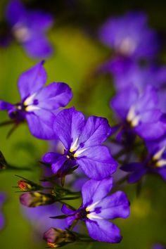 Violets by Peter Liu Photography, via Flickr