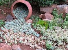 Image result for tuin idees met vetplante