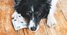 犬を飼うための費用は200万円です【最新版】 - いぬのみみ Dogs, Pet Dogs, Doggies, Dog