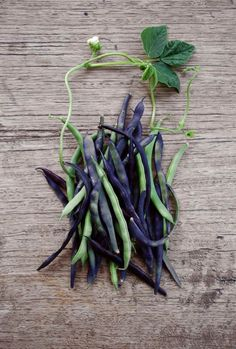 Vegetable #colors: These purple and green beans are cool! via @designsponge