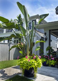 Flowering Container Garden Plants for Sunny Spots Full Sun Container Plants Sun Container Plants 20 Florida Landscaping, Tropical Landscaping, Backyard Landscaping, Landscaping Ideas, Backyard Patio, Full Sun Landscaping, Full Sun Container Plants, Container Gardening, Full Sun Plants