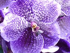 Orchid - photo by Ellerin Eadwine