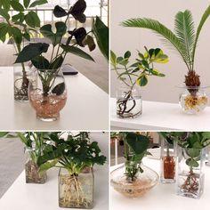 Mijn planten met wortels in water (Hydroponie) op ShowUp februari 2017