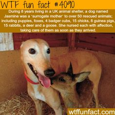 Jasmine the dog is the mother of over 50 rescued animals - WTF fun facts