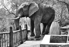 This Elephant came strolling through Etali Lodge in Madikwe when we were staying there! Take Better Photos, How To Take Photos, Photography Lessons, Wildlife Photography, Aperture Settings, Las Vegas Photos, Kruger National Park, Ansel Adams, Less Is More