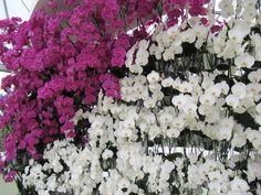 Keukenhof_137 Floral Wreath, Wreaths, Flowers, Decor, Floral Crown, Decoration, Door Wreaths, Deco Mesh Wreaths, Decorating
