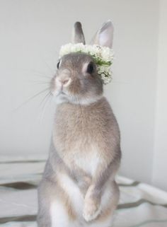 """""""What?! You want me to wear this out of the house??""""   Cutest little bunny not loving the flower crown trend, but still looking darn adorable anyway! #socute #furbabies #animals #animal #bunny #weddingfun #flowercrown #weddings"""