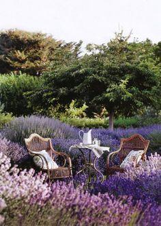 Une allée de jardin provençale avec de la lavande / Provençal garden path, lavender - Marie Claire Maison