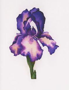 watercolor iris - Поиск в Google