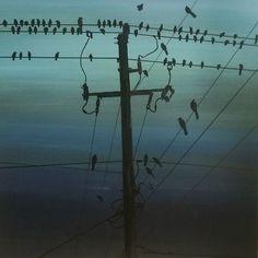Ptaki Dominik Morańda